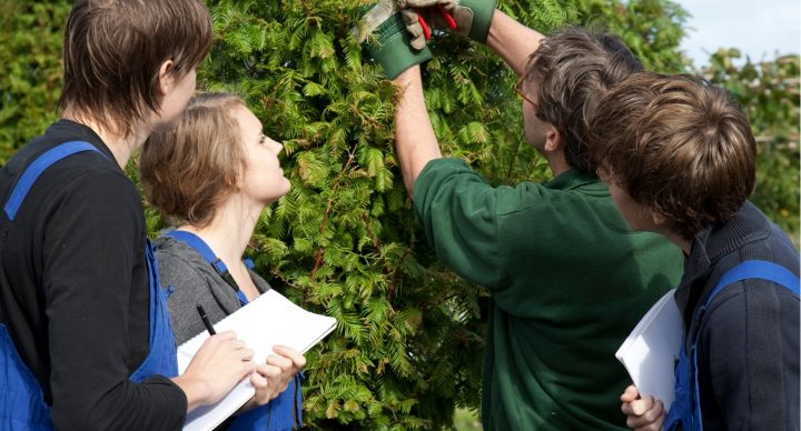 Curso de Monitor de Actividades Agroforestales